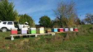 Les ruches 20151110_142526